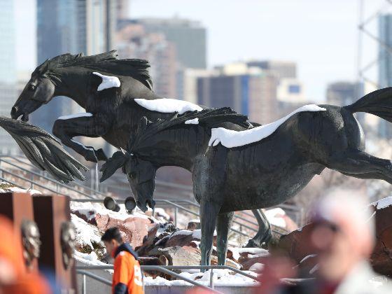 generic tours stadium exterior horses spotlight 560x420